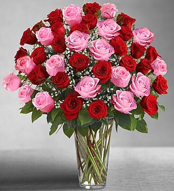 Four Dozen Roses Orlando Flower Market
