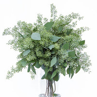 Eucalyptus - Seeded (10 packs)
