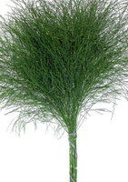 Tree Fern (10 Packs)