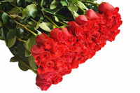 Red Roses - 50 Long Stems