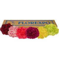 Carnations Asst x200 stems