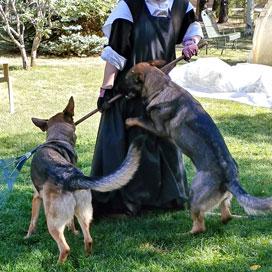 german shepherd, working line