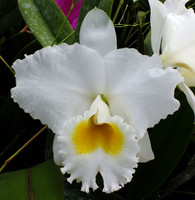 C. Sierra Blanca 'Mt. Whitey' AM/AOS.