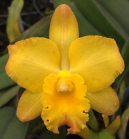 Pot. Sanyo Butterfly 'Parkside' AM/AOS.