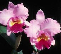 Lc. Irene Finney 'Spring Bounty' AM/AOS.
