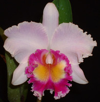 Blc. Dr. Joe Walker 'Ray Mishima'.