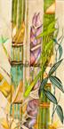 Ornamental Bamboo