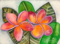 Plumeria — Orange Purple
