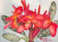 Plumeria — Red