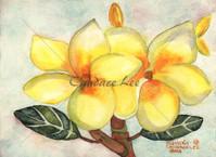 Plumeria — Yellow