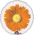 """18"""" Orange Daisy See-Thru Balloon"""