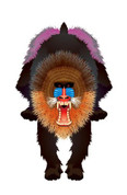 "44"" Mandrill Baboon Rainforest Kite"