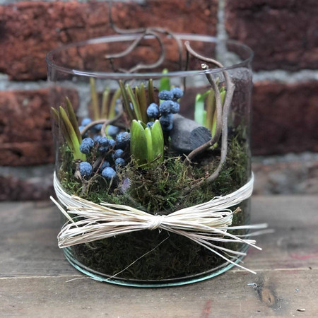 This is just a little bit different and is an ideal gift for someone who prefers growing flowers, to cut flowers.  Within an on-trend vase we have included fragrant hyacinth bulbs with narcissi and muscari and decorative natural accents.  Ideal for a kitchen window so that the changes each morning can be observed!