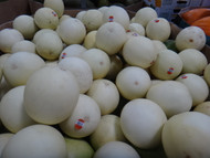 Honeydew Melon | Fairdinks