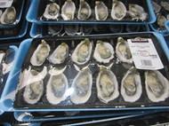 Fresh Pacific Oysters 1 Dozen Product Of Australia | Fairdinks