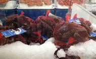 Fresh Tasmanian Mussels 2Kg Bag Product Of Australia | Fairdinks