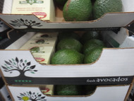 Avocado  5 Pack  Product of Aus and NZ