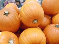 Halloween Pumpkin | Fairdinks