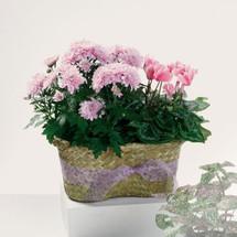 Blooming Duo Plant Basket
