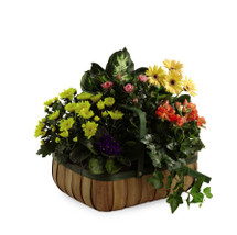 Lush Garden Plant Basket