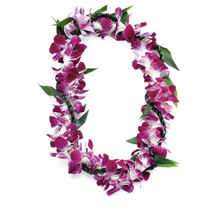 The ti leaf lei twisted in the wili style is an example of adding elegance to any lei. Ti or Kï was the sacred symbol of the gods. Keeping with its spiritual symbolism of old, the ti leaf lei today represents good luck and protection.  This lei is popular for men, the masculine rope lei balancing the delicateness of the flowers.  Care: Sprinkle with water or mist. Wrap in damp paper towel and refrigerate lightly, making sure not to freeze.  Life: Five to Six days. Ships very well.  Fragrance: Little to no fragrance.  Variations: Dendrobium Orchid, White or Green Orchid wrapped with Ti Leaf, Ti Leaf Tuberose and Orchid Combination.