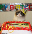 Grumpy Cat Birthday Edible Icing Image