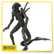 "The Warrior is the primary assault caste of the Xenomorph species. Even in death the Warrior is dangerous, as its pressurized bloodstream will cause it to burst apart, drenching nearby enemies in acid blood. This new 7"" scale Warrior Alien Figure from NECA stands over 9"" tall and features 30 points of articulation."