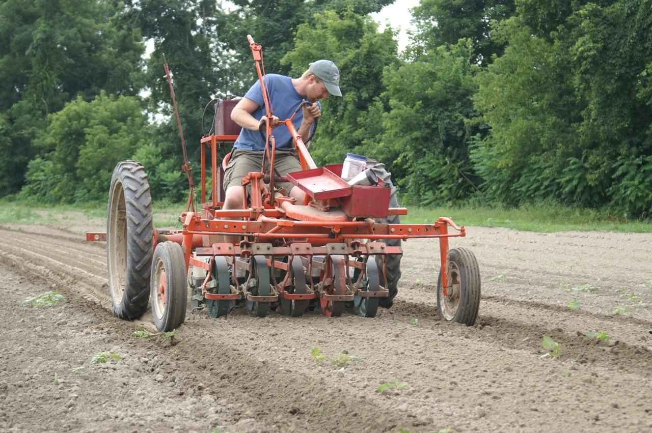 cilantro-seeding-1-.jpg