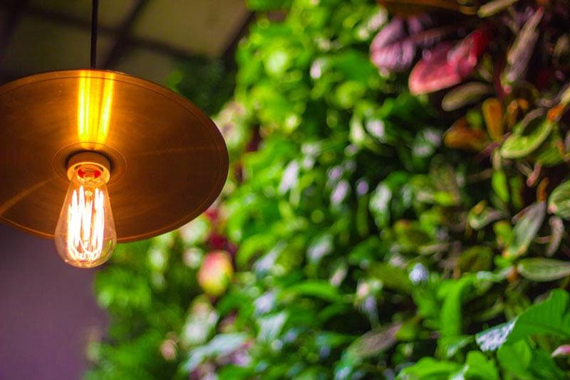 Hanging bulb in garden
