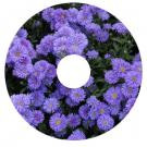 Wheelchair Hubcaps, FL1 - Nature Spoke Guard Art - Purple Asters