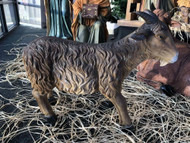 """28"""" Goat is made of fiberglass and resin. Suitable for indoor and outdoor use. Perfect piece to add to your 48"""" or 59"""" Heaven's Majesty Nativity Set.  (Pairs with #53396 48"""" Heaven's Majesty Nativity Figures)"""