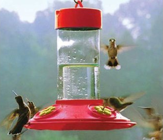 bird-feeder-basics-hummingbird.png
