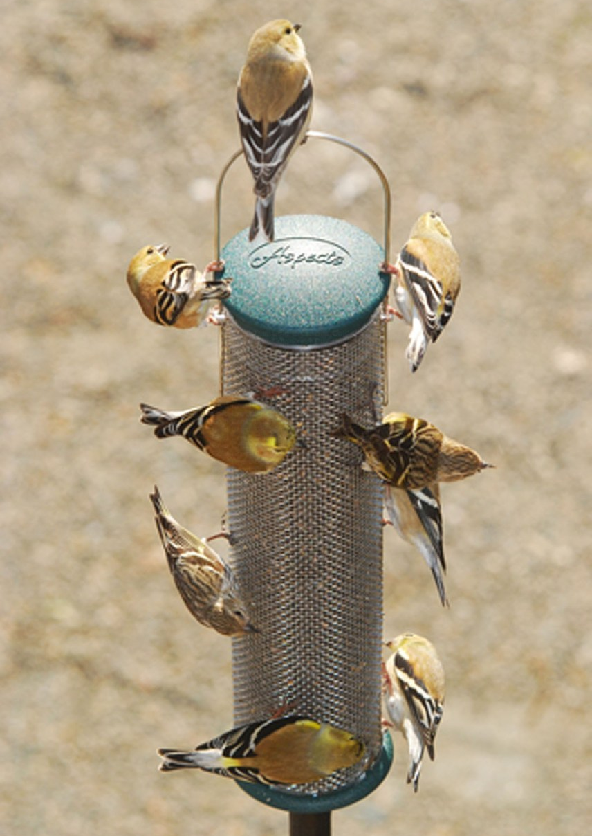 bird-feeder-basics-nyjer.png