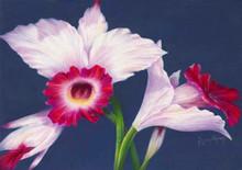 Atlanta Orchid S520-3/500 in Pastel Print by Susan Edgmon