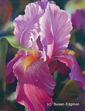 10.75 x 14 Dianne's Iris S521-11/750 Original Painting in Pastel Print by Susan Edgmon