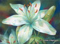10.75 x 14.75 Dianne's Lily S570-3/500 Original Painting in Pastel Print by Susan Edgmon