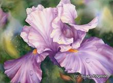 10.75 x 14.75 Divine Iris S469-19/500 Original Painting in Watercolor Print by Susan Edgmon