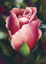 21.5 x 29.5 Early Morning Rose S465-6/750 Original Painting in Pastel Print by Susan Edgmon