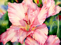 21.5 x 29.5 Floyd's Gladiolus S516-10/500 Original Painting in Watercolor Print by Susan Edgmon