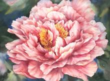 11 x 15 Glorious Peony S470-16/500 Original Painting in Watercolor Print by Susan Edgmon