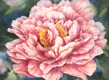 16 x 22 Glorious Peony S470-14/500 Original Painting in Watercolor Print by Susan Edgmon
