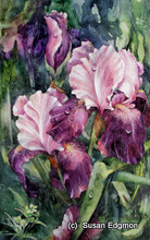 9.5 x 15.25 Karen's Iris S527 Original Painting in Watercolor by Susan Edgmon