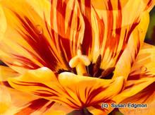 10.75 x  14.75 Lutie's Tulip S534-3/750 Original Painting in Pastel Print by Susan Edgmon