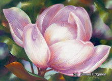 21.5 x 29.5 Magnolia S517-5/500 Original Painting in Pastel Print by Susan Edgmon