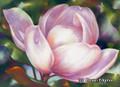 15 x 22 Magnolia S517-3/500 Original Painting in Pastel Print by Susan Edgmon