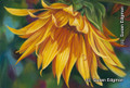 10.75 x 14.375 Nature's Bounty S519-4/500 Original Painting in Pastel Print by Susan Edgmon