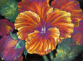 21.5 x 29.5 Pansy Power S306-10/500 Original Painting in Pastel Print by Susan Edgmon