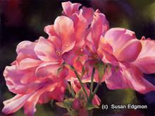 18 x 24 Provin's Rose S576 Original Painting in Pastel by Susan Edgmon