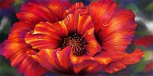 16.5 x 33 Red Poppy S505-20/500 Original Painting in Pastel Print by Susan Edgmon