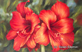7.875 x 12.5 Rozi's Amaryllis S518-17/500 Original Painting in Oil Print by Susan Edgmon